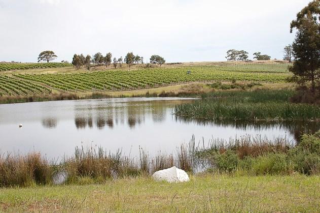 Milton Vineyard Tasmanie