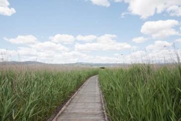 Tamar River Wetlands Reserve en Tasmanie