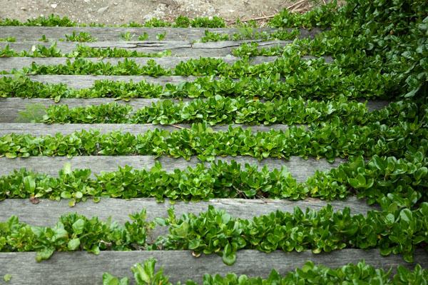 Photo du Mois thème Escalier