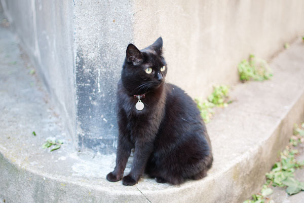 Cute chat noir dans Paris