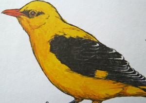 Meistervogel