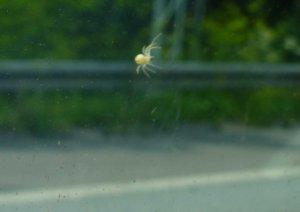 Leider unscharf: ein spinnenartiges Wesen an der Autoscheibe. (Bild: Forschungsprojekt Berke)