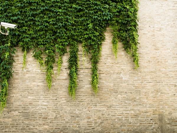 Imagem mostra uma câmera bullet em frente a um muro coberto por folhas.