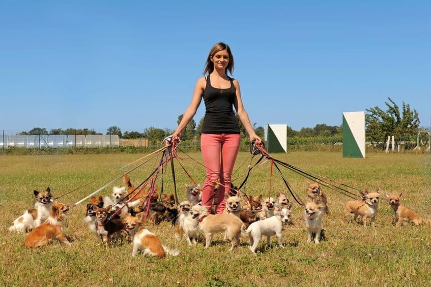 pettorina-cane-dog-sitter-xcyp1