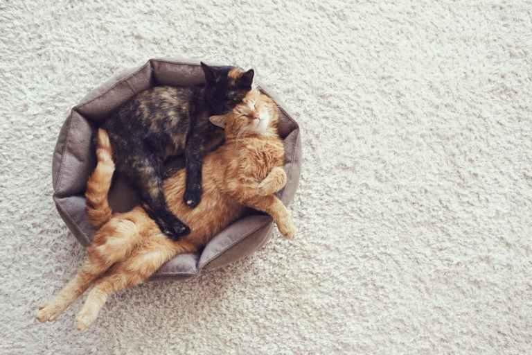 cuccia-per-gatti-terza-xcyp1