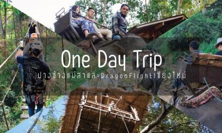 One Day Trip ปางช้างแม่สาและ Dragon Flight เชียงใหม่