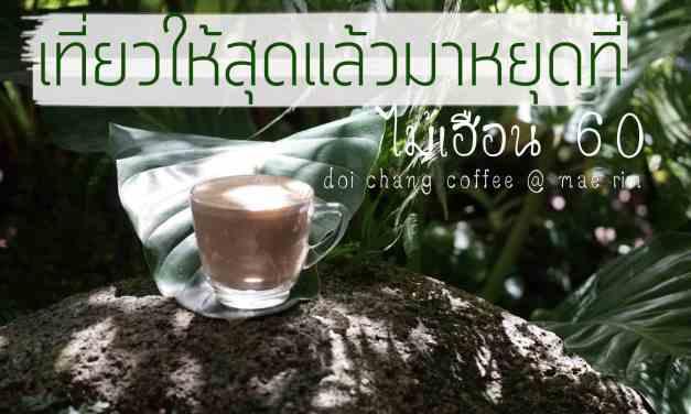 เที่ยวให้สุดแล้วมาหยุดที่ ไม้เฮือน 60 doi chang coffee @ mae rim