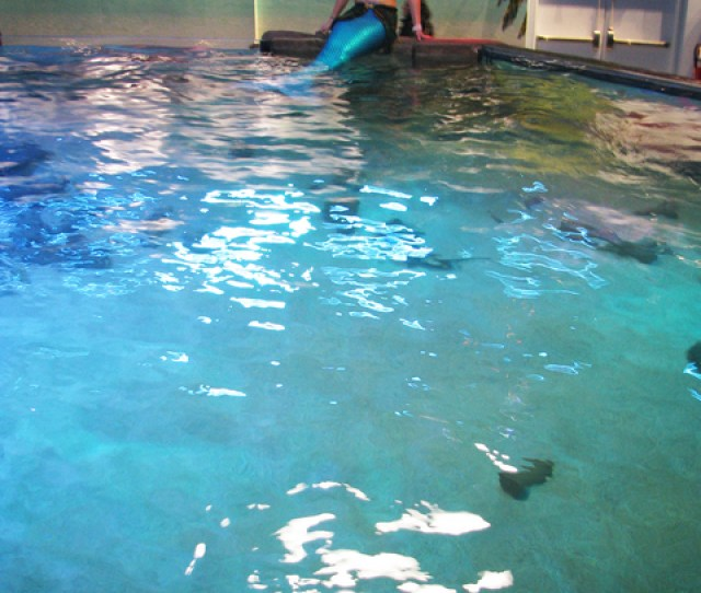 A Mermaid Lounges In The Stingray Pool At Seaquest Interactive Aquarium In The Boulevard Mall