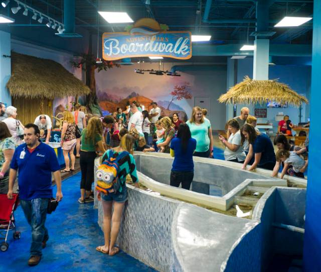 Seaquest Interactive Aquarium At The Boulevard Mall In Las Vegas On Friday April