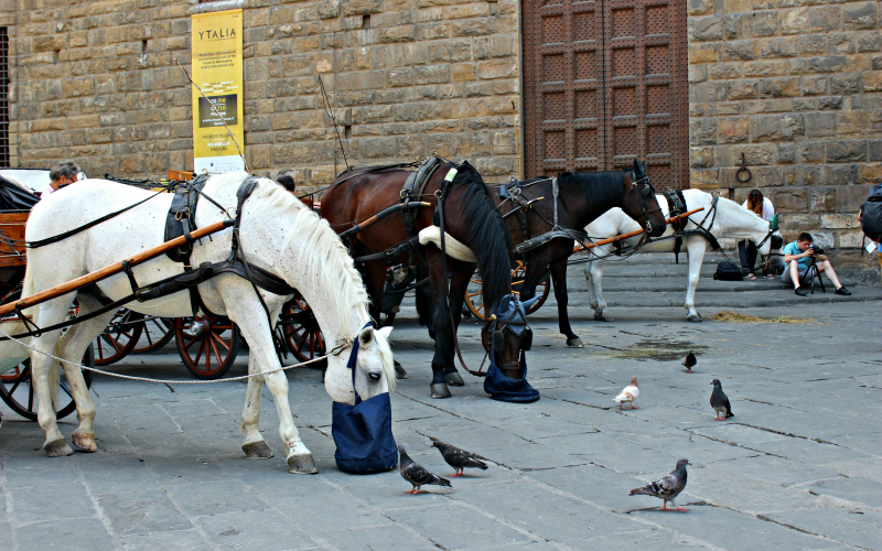Paarden in Florence