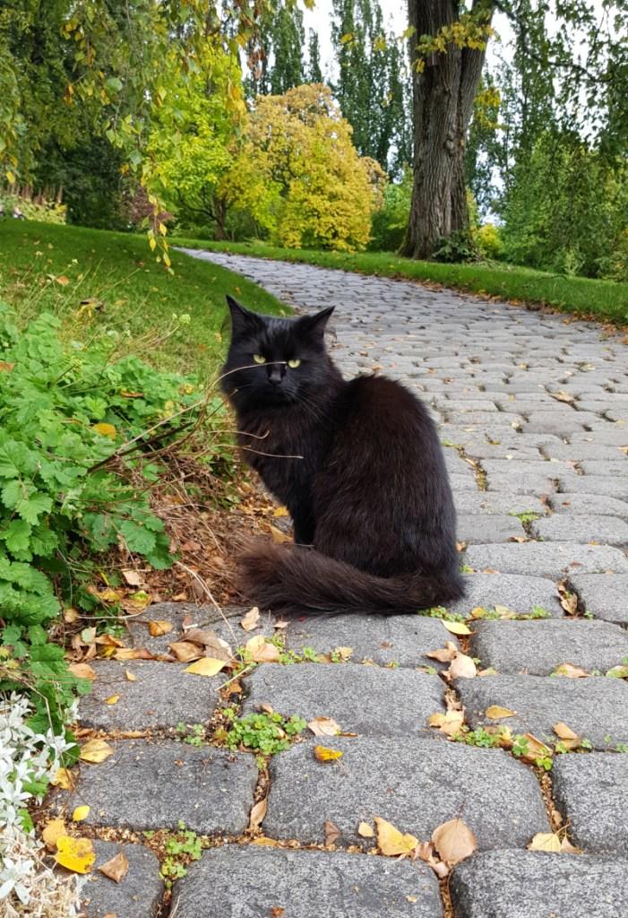 Cat in The Botanical Garden Norway