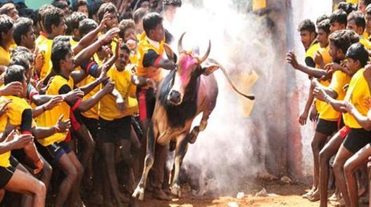 jallikattu-bangalore supports protest over ban