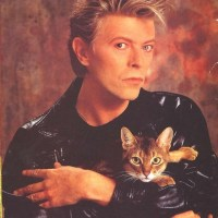 Bowie with Cat