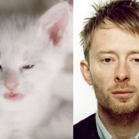 Thom Yorke and a Cat