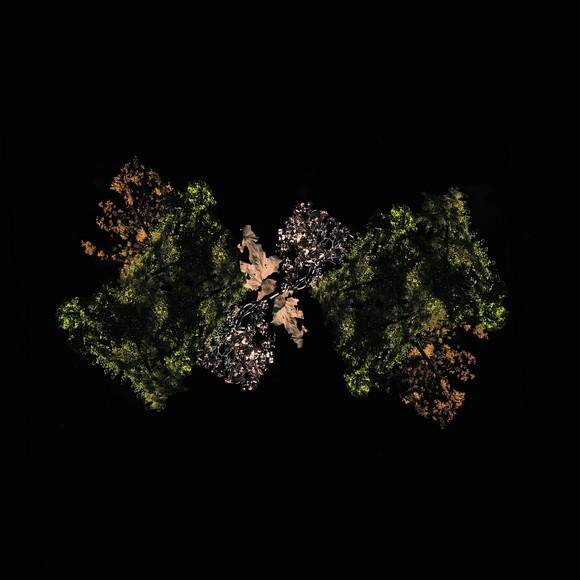 woodsman_medium_image