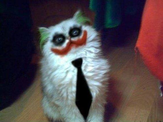 a.baa-Scary-cat-with-makeup