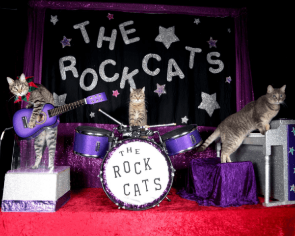 rock cats minneapolis