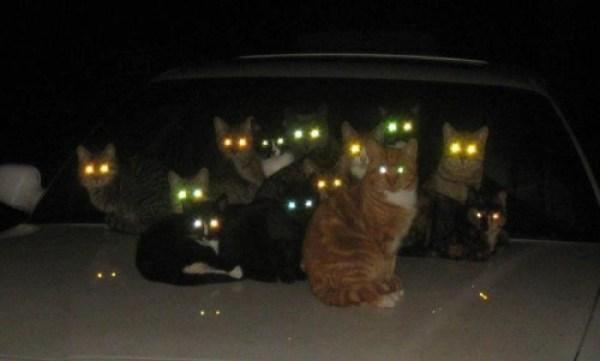 reviler-creepy-cat