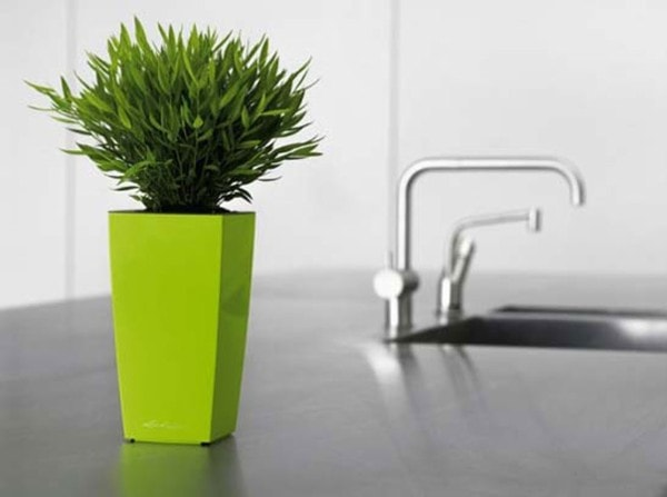 Potted plant. Image credit hotstyledesign.com