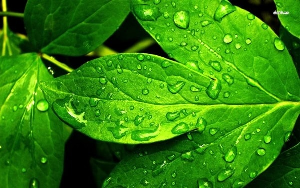 Leaves are the factories of the world. Image credit  desktopwallpapers4.me