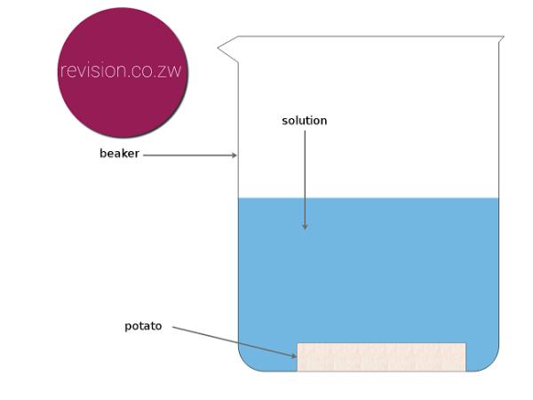 osmosis_plants