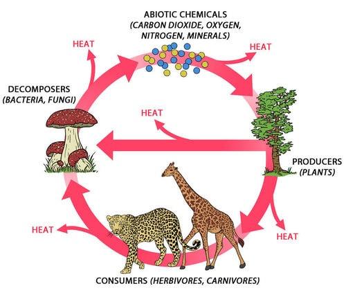 An ecosystem diagram. Image credit ck12.org