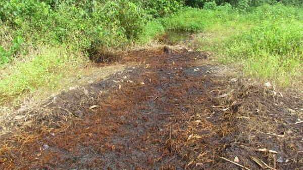 Oil spills are destructive to vegitation. Image credit africanewscircle.com