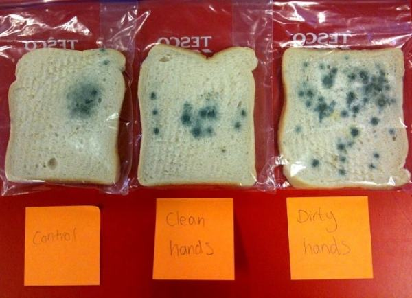 Mouldy bread and their conditions. Image credit