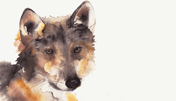 Enquanto 'seu' lobo não vem…
