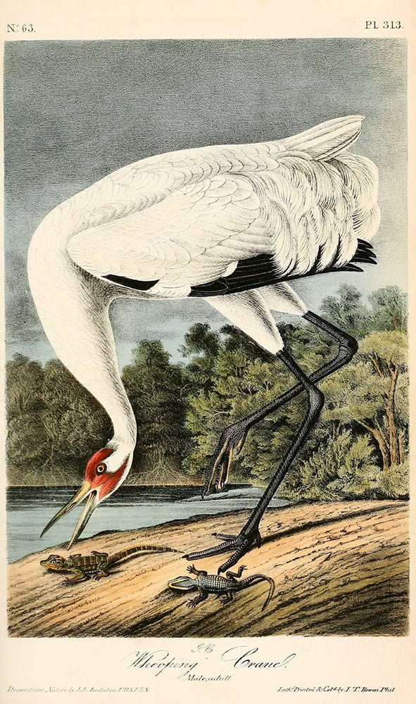 Birds of America, John James Audubon
