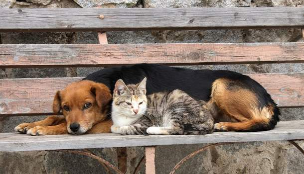 Adotar cães e gatos é coisa séria! Se não for para cuidar, não os tenha