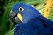 animais da fauna brasileira 3