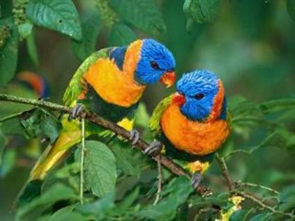 animais da fauna brasileira 6