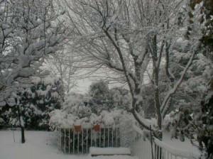 Nieve, nevado, paisaje blanco, buitrago