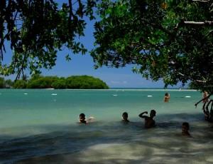 mangroves-salinas