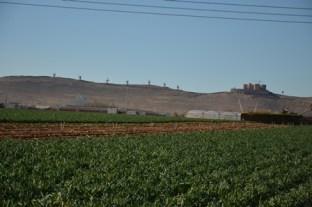 Campo de cebolletas (4)