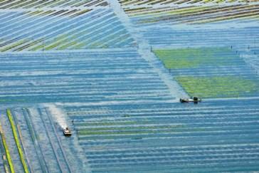 Vue aérienne des parcs ostréicoles à Loix
