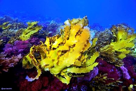 02/April/2013 Western Australia.UWA researchers working at Abrolhos Islands..©†JOAN COSTA.