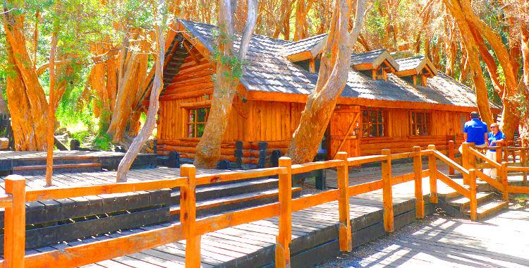 Paseo en el Bosque de Arrayanes