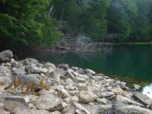Huella Andina: Sendero Laguna Escondida - Parque Nacional Los Alerces, Chubut
