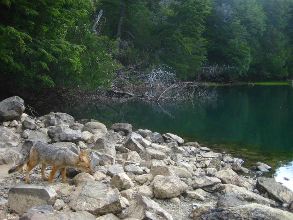 Huella Andina: Sendero Laguna Escondida – Parque Nacional Los Alerces, Chubut