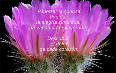 https://i1.wp.com/www.revistaecclesia.com/wp-content/uploads/2014/07/flor.jpg