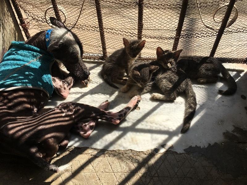 Armando y los gaticos ciegos de Aymara / Foto: Darío Alejandro Alemán