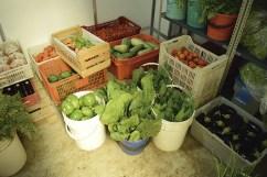 Algunos de los productos cosechados en la finca y almacenados para su posterior consumo o proceso.