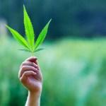Soros y la legalización de la marihuana