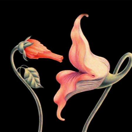 Dibujo de dos flores que lucen como si fuesen un pene y una vagina apunto de copular.