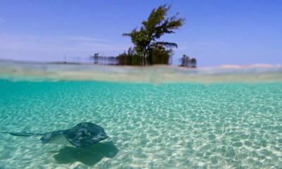 Fundação garante reconstrução de corais destruídos pelo furacão Matthew