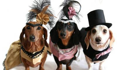 Locais especializados são melhor opção para pets durante o Carnaval