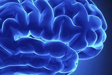 Descubren que el cerebro monitoriza el crecimiento del cuerpo y corrige las alteraciones 2