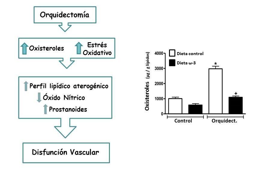 ciencia salud : cáncer de próstata y colesterol